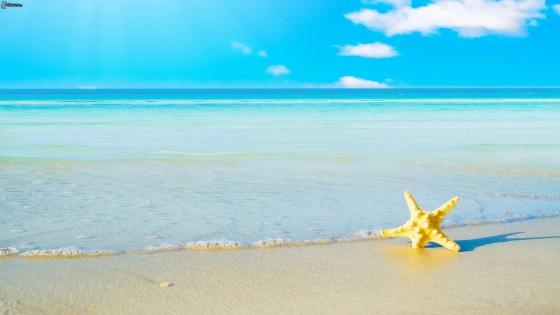 stella-di-mare,-alto-mare,-spiaggia-sabbiosa-237076